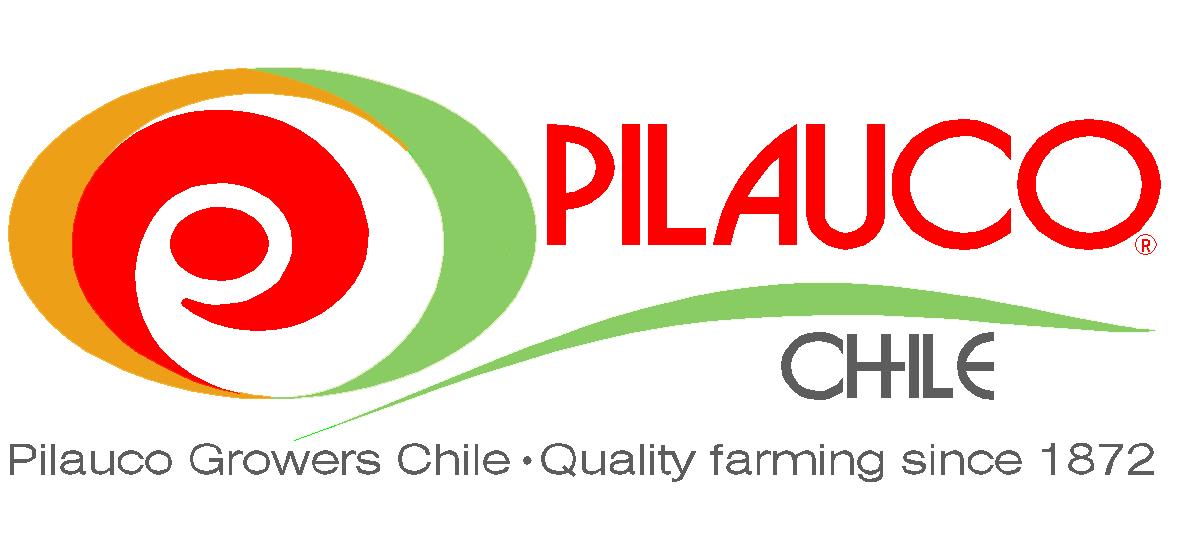 Pilauco